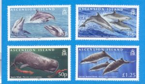ASC168CM Whales & Dolphins