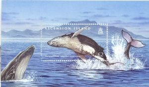 ASC168SM Whales & Dolphins